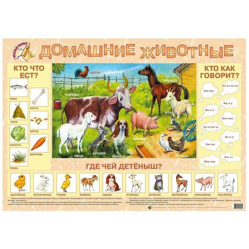 Плакат Маленький гений Домашние животные 9005