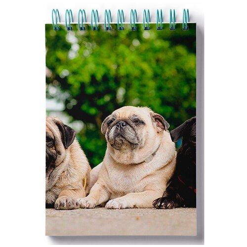 Блокнот для записей, листы в клетку Пазл магнитный мопс, 2 собаки, бутылка и книга