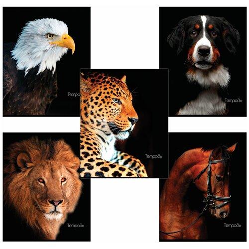 Купить Тетрадь А5, 48 л., BRAUBERG, клетка, обложка картон, животные, 403034, Тетради