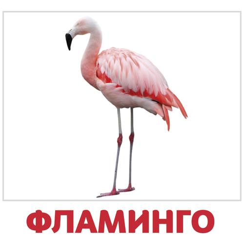 Фото - Набор карточек Агабум Птицы 20 шт. набор карточек агабум цветы 20 шт