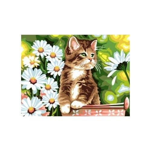 Купить Картина по номерам Paintboy «Котенок в ведерке» (холст на подрамнике, 30х40 см), Картины по номерам и контурам