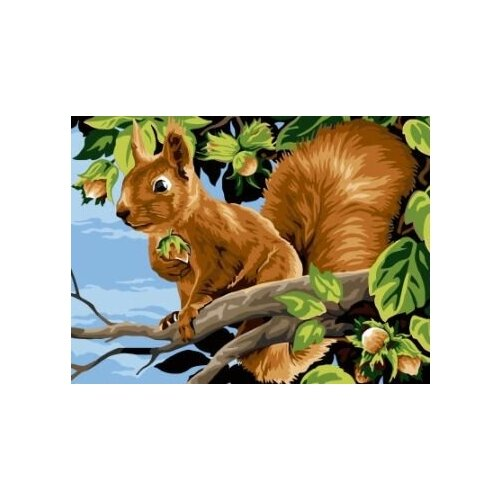 Купить Картина по номерам Paintboy «Белочка» (холст на подрамнике, 30х40 см), Картины по номерам и контурам