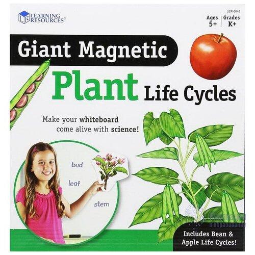Обучающий набор Learning Resources Жизненный цикл растений LER6045