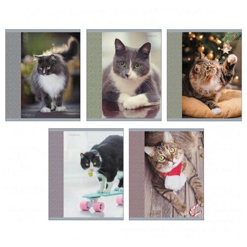 Тетрадь общая А5 96л клетка,скрепка,обл.карт.Любимый кот 5диз ТК966158 7 шт. тетрадь 96л а5 клетка канц эксмо красочные кошки на скрепке