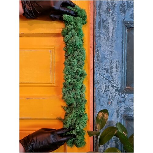 Лента из мха для озеленения интерьера