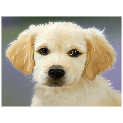 Купить Набор юного художника 20х30 пушистый щенок (15 цветов) - KH0869, Molly, Наборы для рисования