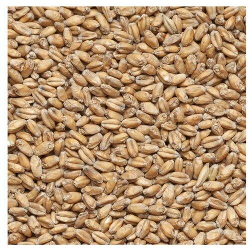 Солод Пшеничный, Курский солод, 5кг