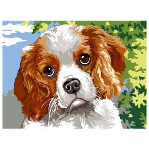 Купить Картина по номерам Цветной «Спаниэль» (холст на подрамнике, 30х40 см), Картины по номерам и контурам