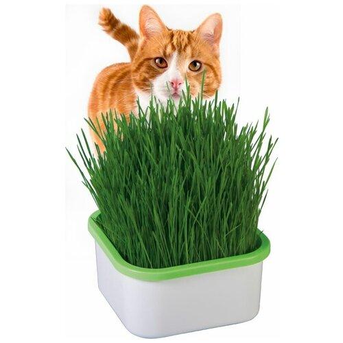Здоровья Клад Проращиватель для зеленой травки, Здоровья клад