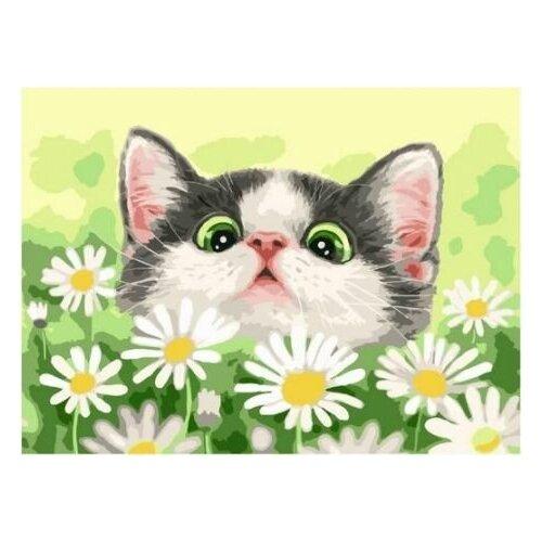Купить Картина по номерам Paintboy «Котёнок в ромашках» (холст на подрамнике, 30х40 см), Картины по номерам и контурам
