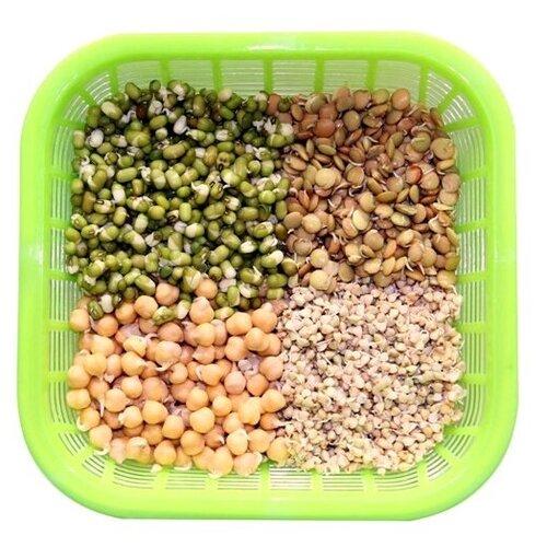 Проращиватель Здоровья Клад для пищевых проростков