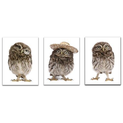 Комплект картин на холсте LOFTime 3 шт 30Х40 смешные совята К-047-3040