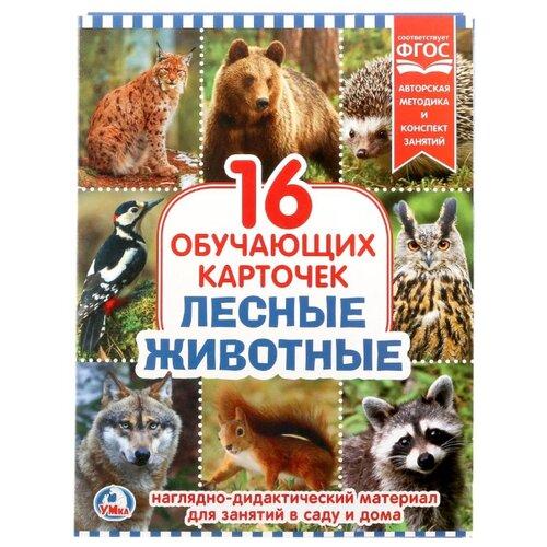 Купить Набор карточек Умка Лесные животные 21.8x16.7 см 16 шт., Дидактические карточки