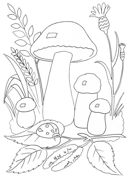 Лет женщине, грибы и ягоды картинки для детей раскраски