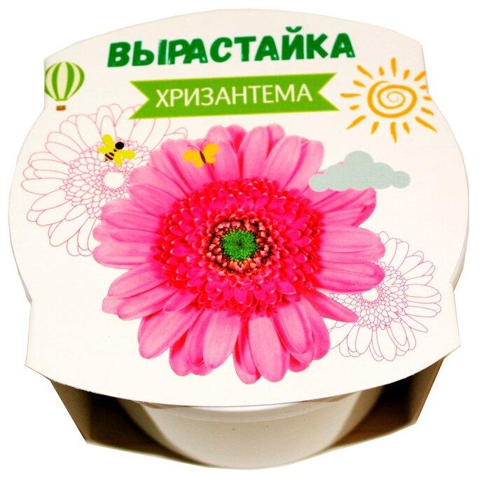 Набор для выращивания Ракета Вырастайка Хризантема