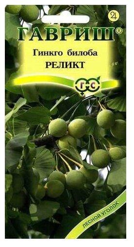 """Семена. Гинкго билоба """"Реликт"""" (2 штуки)"""