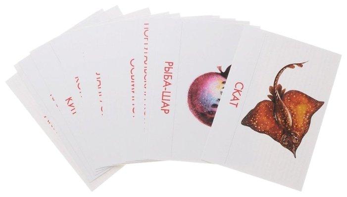 Набор карточек Маленький гений Морские обитатели 25x15 см 16 шт.