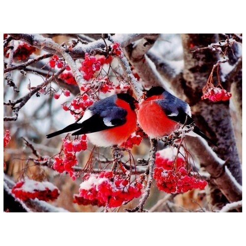 Купить Цветной Картина по номерам Снегири на веточке рябины 40х50 см (GX8859), Картины по номерам и контурам