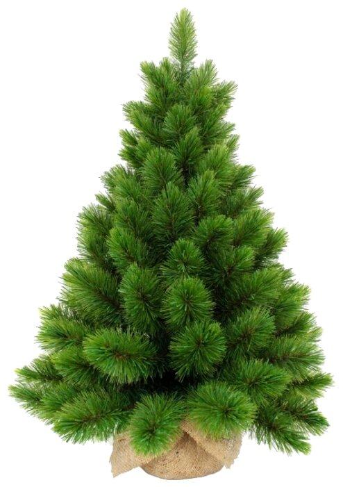 Triumph Tree Ель Триумф Норд в мешочке