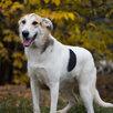 Чудесный подросток в поиске семьи  по цене даром - Собаки, фото 5