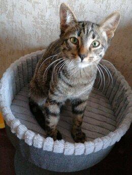 Кошки - Отдаём Котика. Срочно!!! , 0