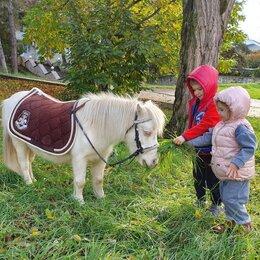 Лошади - Самые красивые и дорогие лошадки, 0