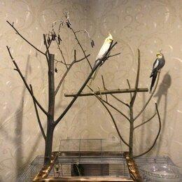 Игрушки и декор  - Стенд для попугая, 0