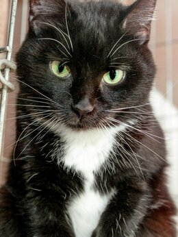 Кошки - Нарядная кошечка Альпака, 2 года, 0