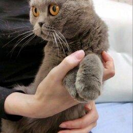 Кошки - Вислоухая кошка в дар, 0