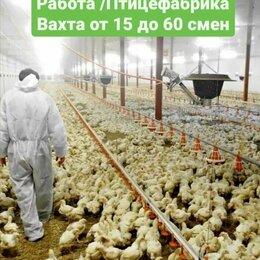 Упаковщик - РАБОТА/ПТИЦЕФАБРИКА/ВАХТА , 0