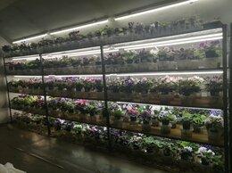 Комнатные растения - фиалки цветущие, 0