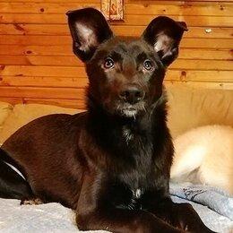 Собаки - Самый обнимательный щенок Ассоль в добрые руки , 0