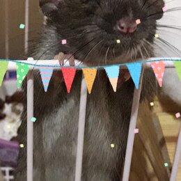 Услуги для животных - Передержка грызунов крыс кроликов ежей, 0