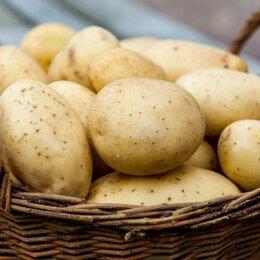 Электронные книги - Методика выращивания картофеля ПДФ для бизнеса,40 стр., 0