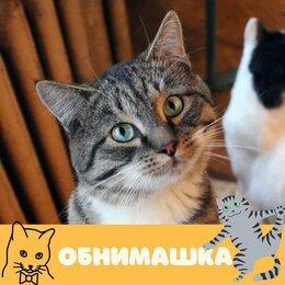 Кошки - Кот Обнимашка, 0