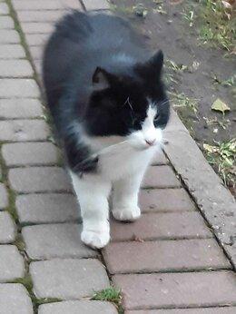 Животные - Найти дом коту, 0