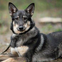 Собаки - Собака Афина, 0
