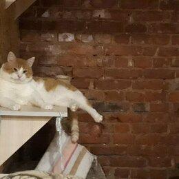 Кошки - Очень ласковый толстячок Атилла, 0