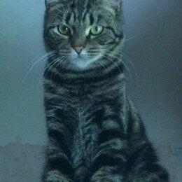 Кошки - Котенок Тоша-Антоша 10 месяцев, 0