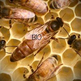 Сельскохозяйственные животные и птицы - Матки пчел, 0