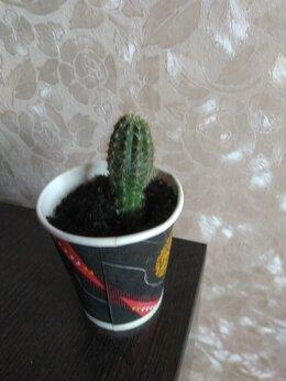 Комнатные растения - Кактусы, 0