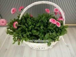 Цветы, букеты, композиции - Маргаритки в белой корзине, 0