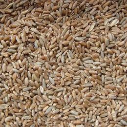 Товары для сельскохозяйственных животных - Ячмень в мешках 30 кг, 0