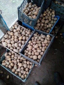 Лук-севок, семенной картофель, чеснок - Картофель, 0