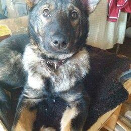 Собаки - В поиске дома, 0