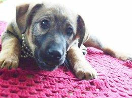 Собаки - Ласковая, трепетная, Любвеобильная, Щенуля ,…, 0
