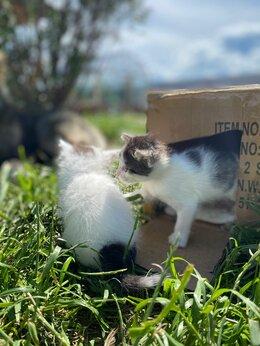 Животные - Котята ищут МАМУ, 0