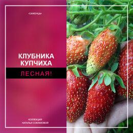 Рассада, саженцы, кустарники, деревья - Клубника 🍓 Купчиха ( саженцы ), 0