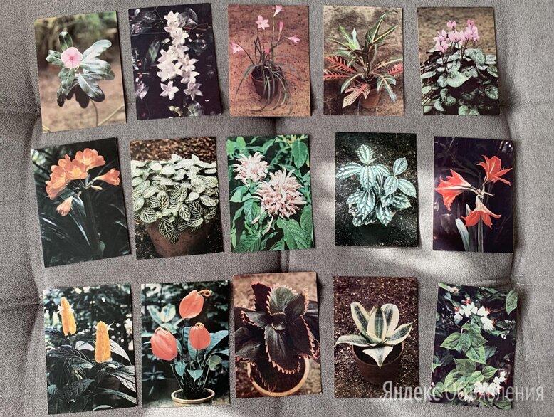Карточки комнатные растения по цене 200₽ - Открытки, фото 0