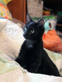 Кошки - Котёнок Чифирчик, 0